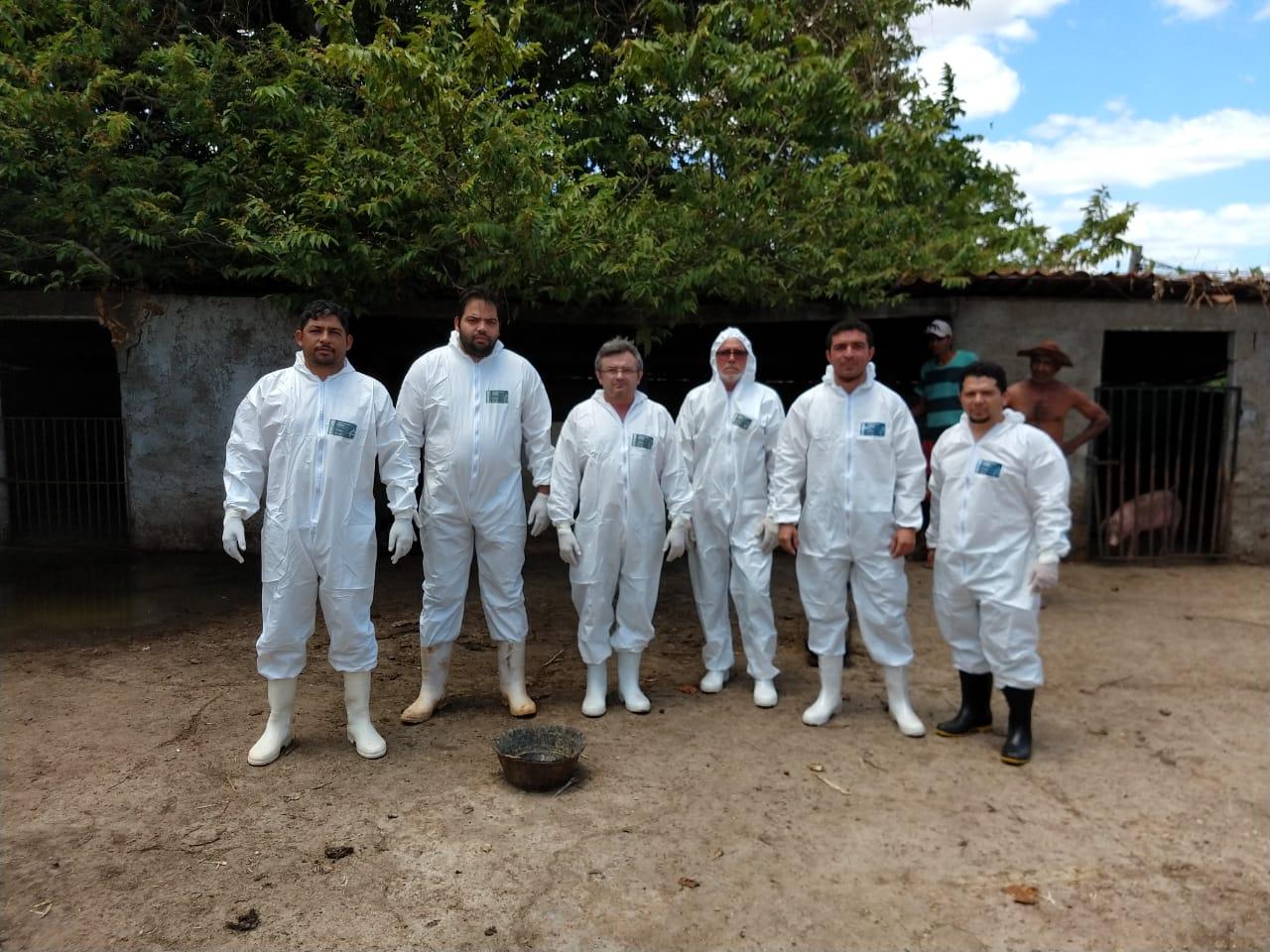 Adagri Intensifica ações de controle e erradicação da peste suína