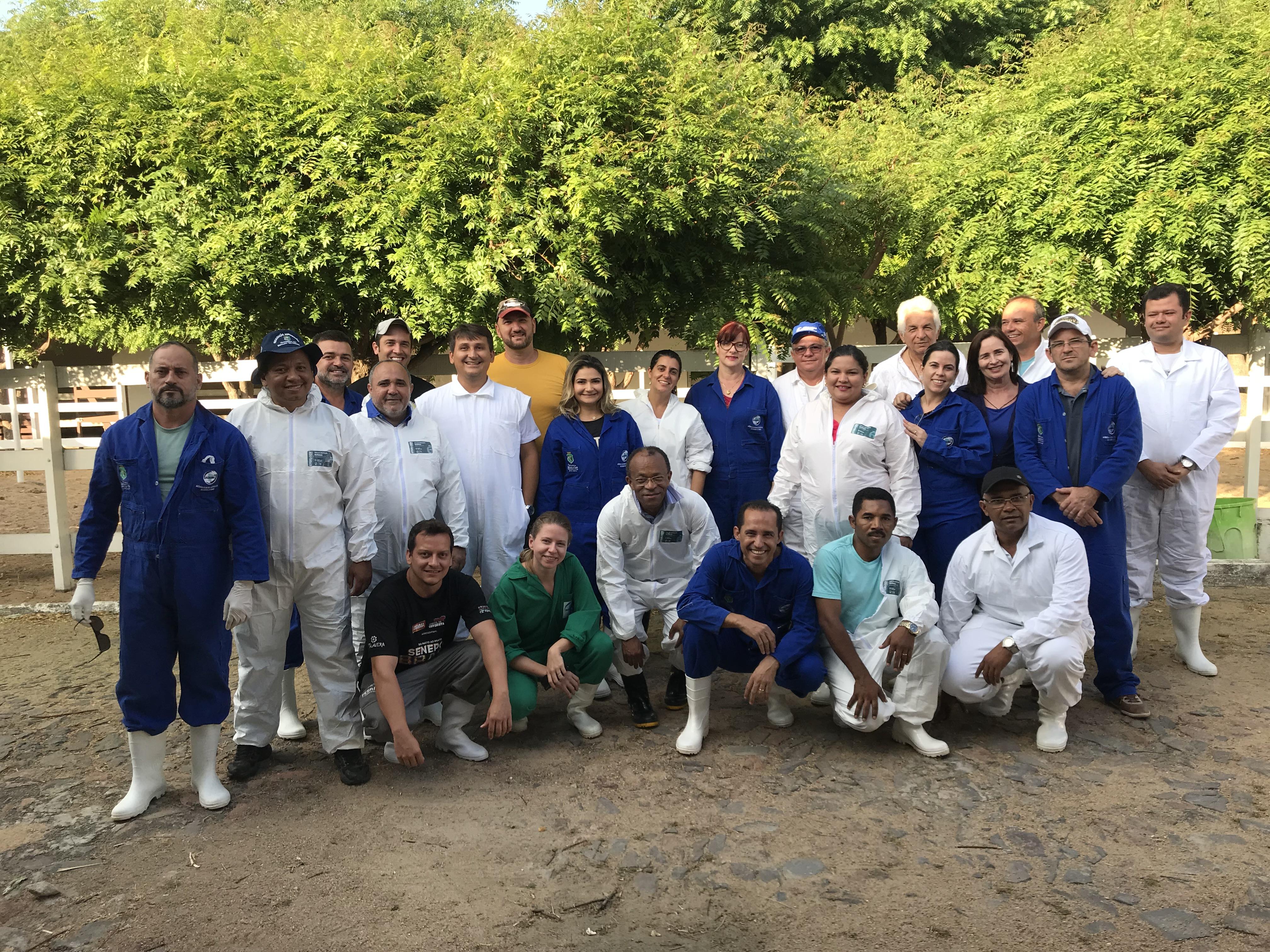 Serviço Veterinário Oficial intensifica ações para erradicação da peste suína