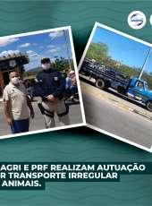 Adagri e PRF realizam autuação por transportes irregular de animais