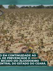 ADAGRI realiza ação em continuidade ao Programa Estadual de Prevenção e o Controle da Praga Bicudo-do-Algodoeiro na Região Sertão Central do Estado do Ceará