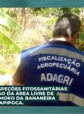 ADAGRI realiza Inspeções Fitossanitárias para a Manutenção da Área Livre de Sigatoka Negra e Moko da Bananeira no Município de Itapipoca