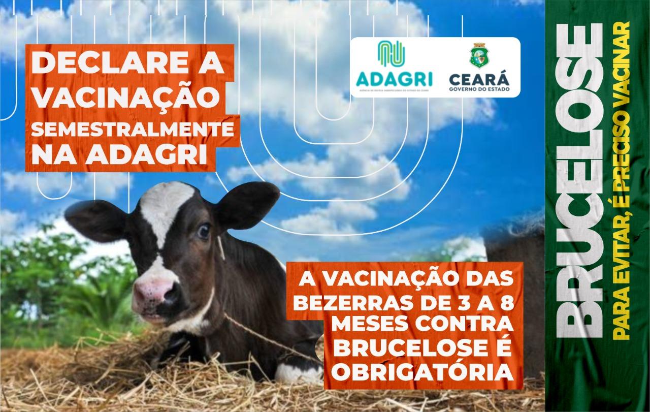 Adagri acompanha vacinação contra Brucelose no município de Crateús