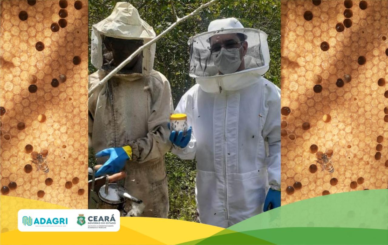 Adagri realiza atendimento à notificação de Varrose em apiário de Ocara