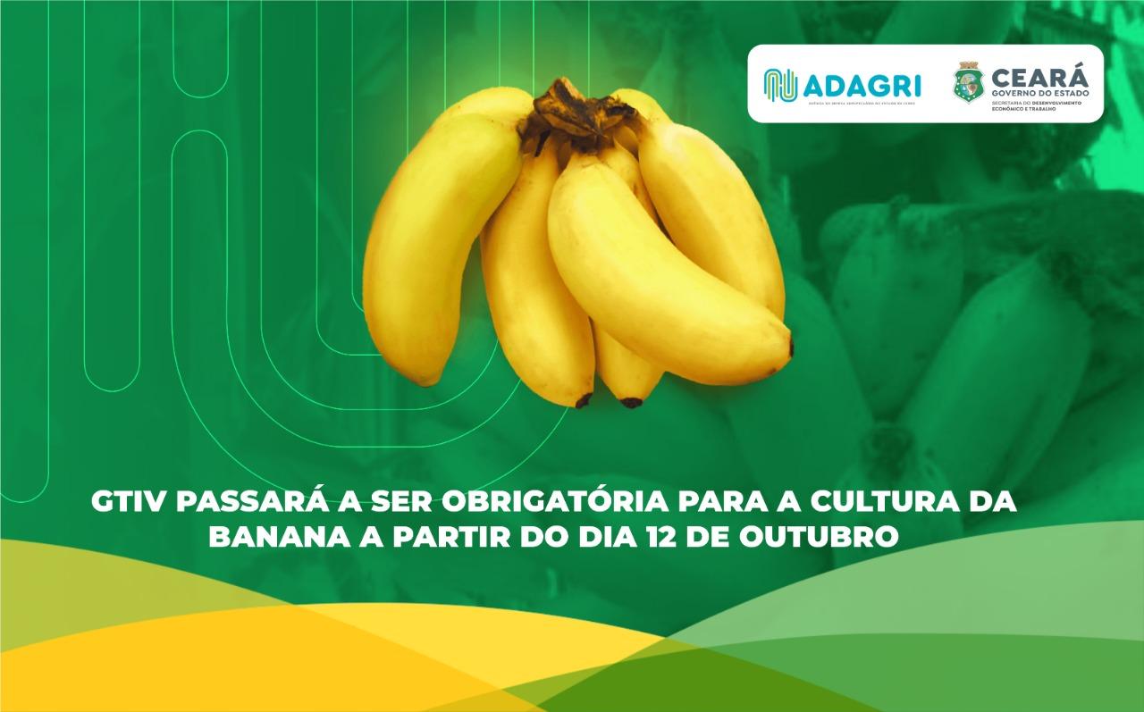 GTIV passará a ser obrigatória para a cultura da banana a partir do dia 12 de outubro