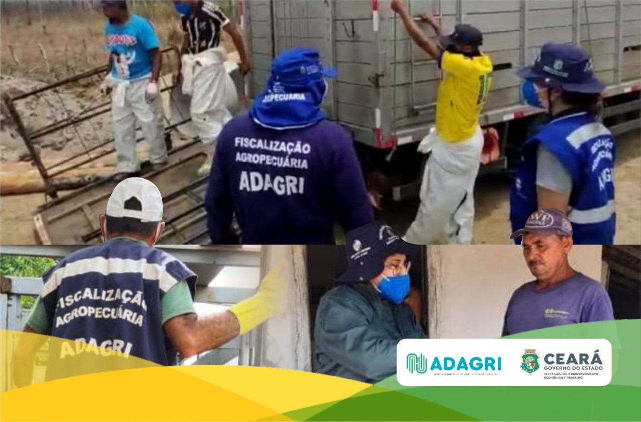 Adagri indenizará criadores que tiveram seus animais sacrificados por conta da Peste Suína Clássica